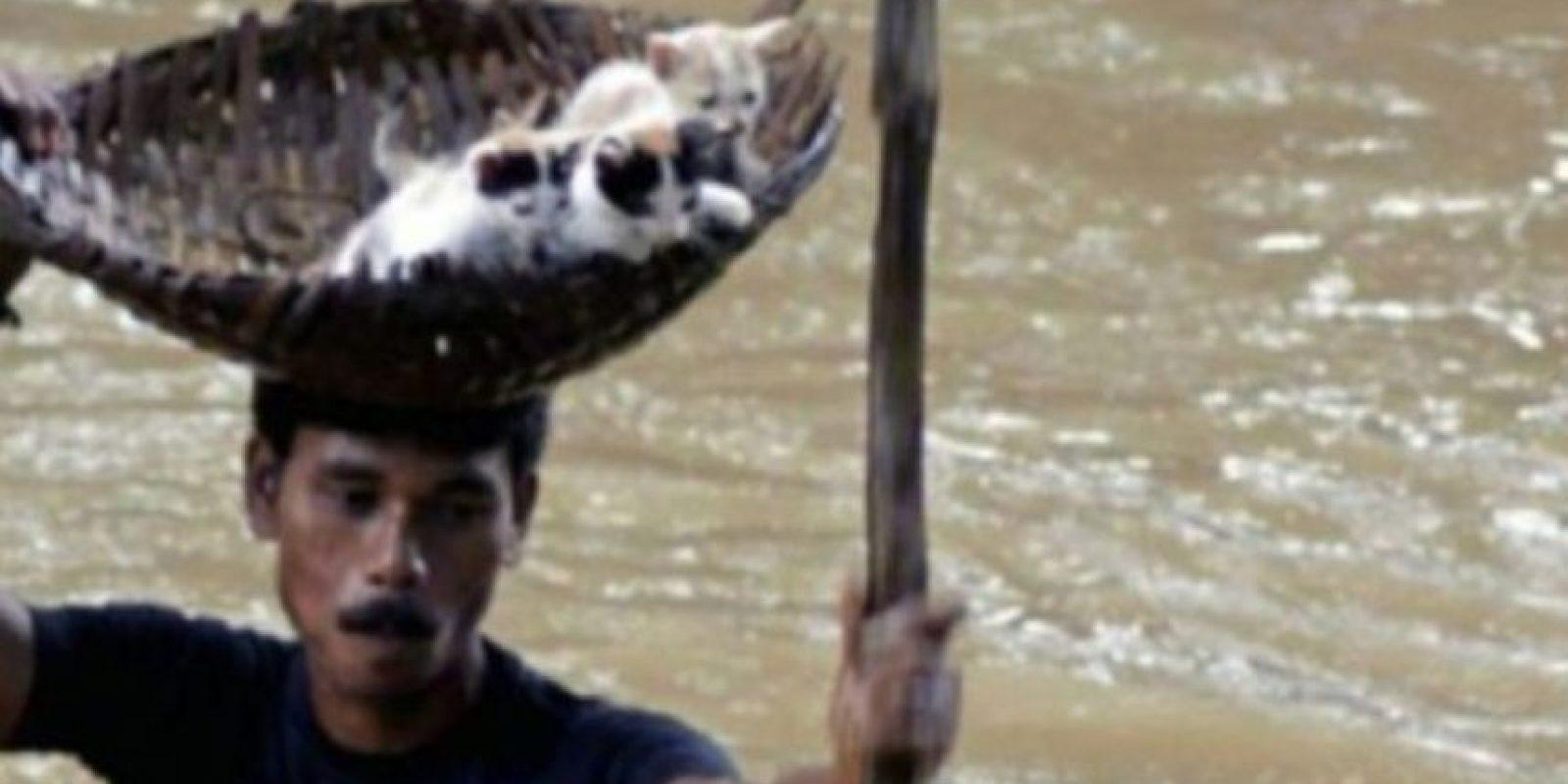 Un hombre indio salva a tres gatitos de una inundación Foto:AFP