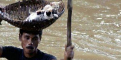 Este indio salva a tres gatitos del agua Foto:AFP