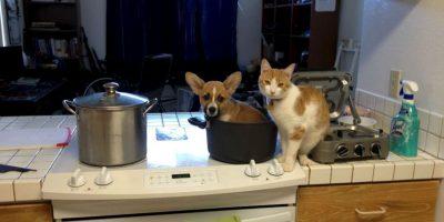 FOTOS: Perro y gato le enseñan al mundo cómo ser mejores amigos