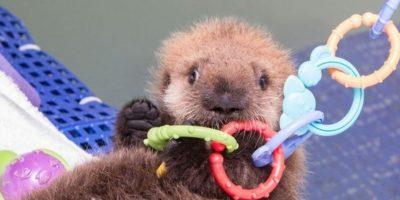 FOTOS: ¡Qué ternura! Los 29 animales bebés más adorables del mundo