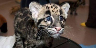 Este sorprendido felino. Foto:Imgur