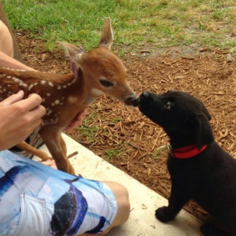 Estos dos animalitos haciendo amistad. Foto:Imgur