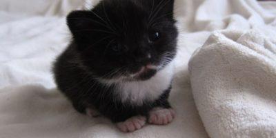 Esta gotita de gato. Foto:Imgur