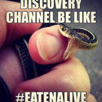 Más burlas del Eaten Alive. Foto:Twitter