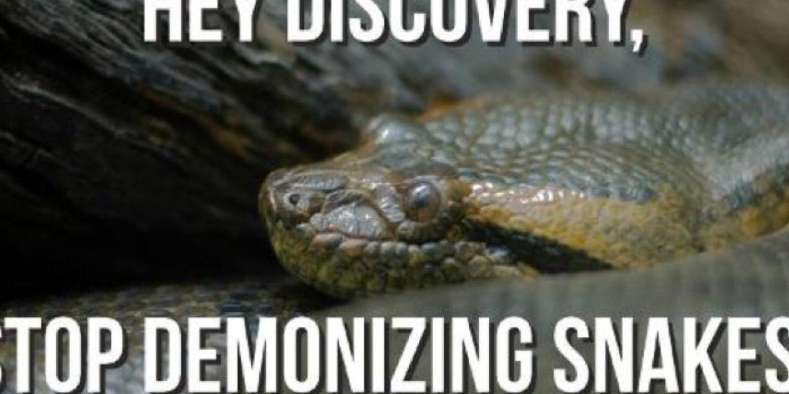 Piden que Discovery deje de demonizar a las anacondas. Foto:Twitter