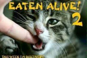 La segunda emisión de Eaten Alive. Foto:Twitter