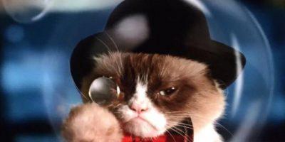 Grumpy Cat, la gata más poderosa de Internet