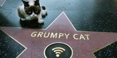 Foto: Instagram/Grumpy Cat