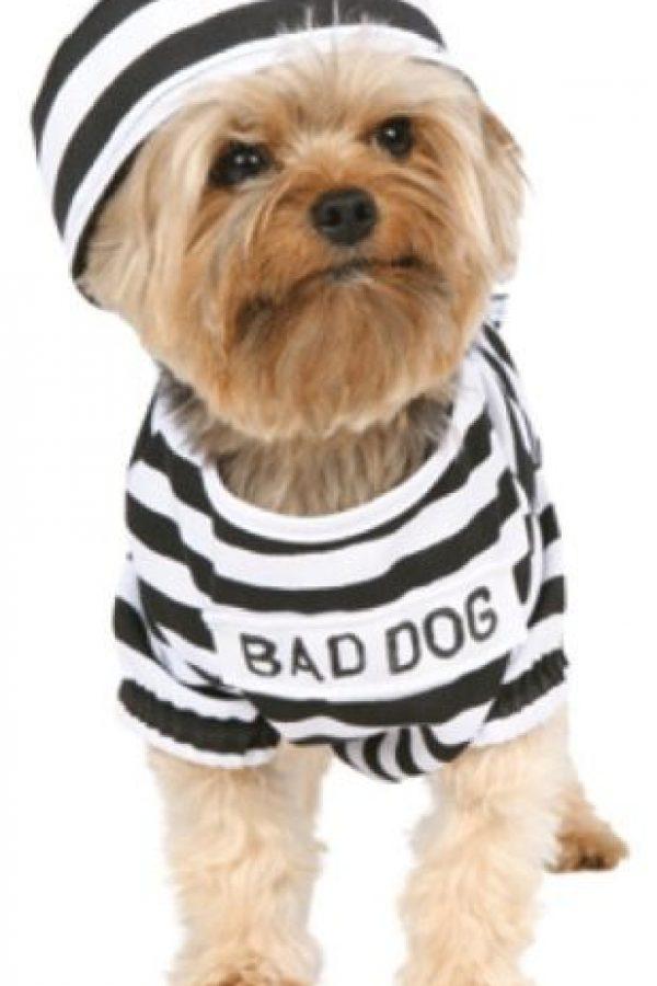 Mal, mal perro Foto:Know Your Meme