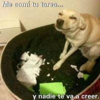 ¡Ups! Foto:Tumblr.com/Tagged-bad-dog