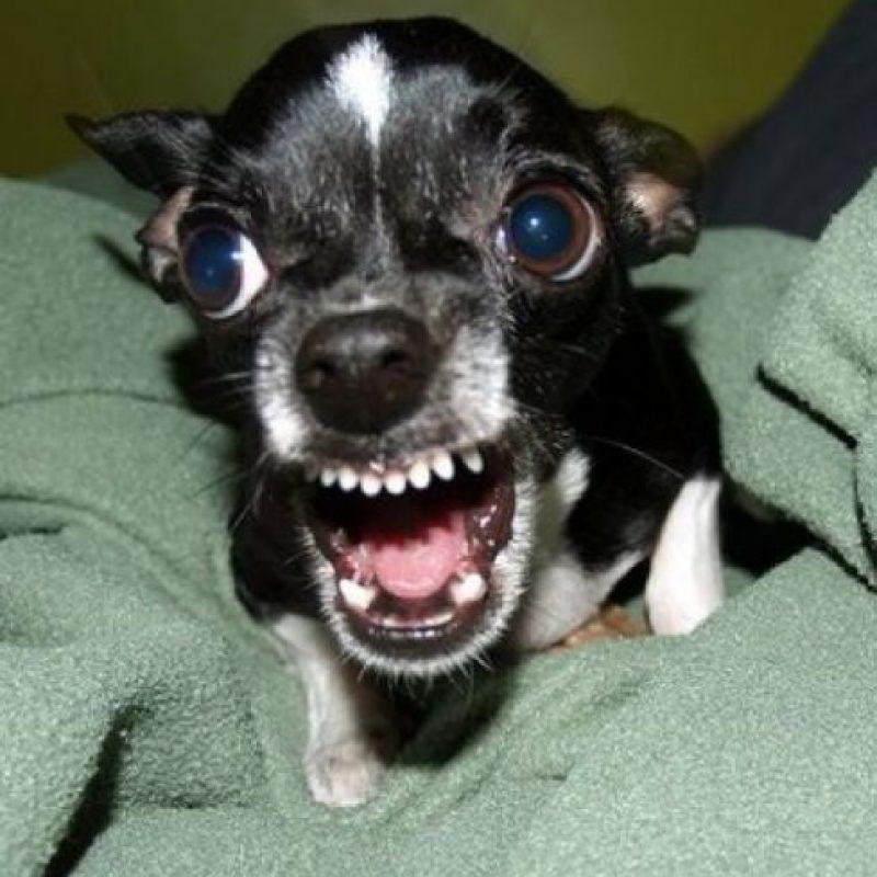 Foto:Tumblr.com/Tagged-bad-dog