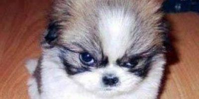 FOTOS: Los 24 perros más malvados de Internet