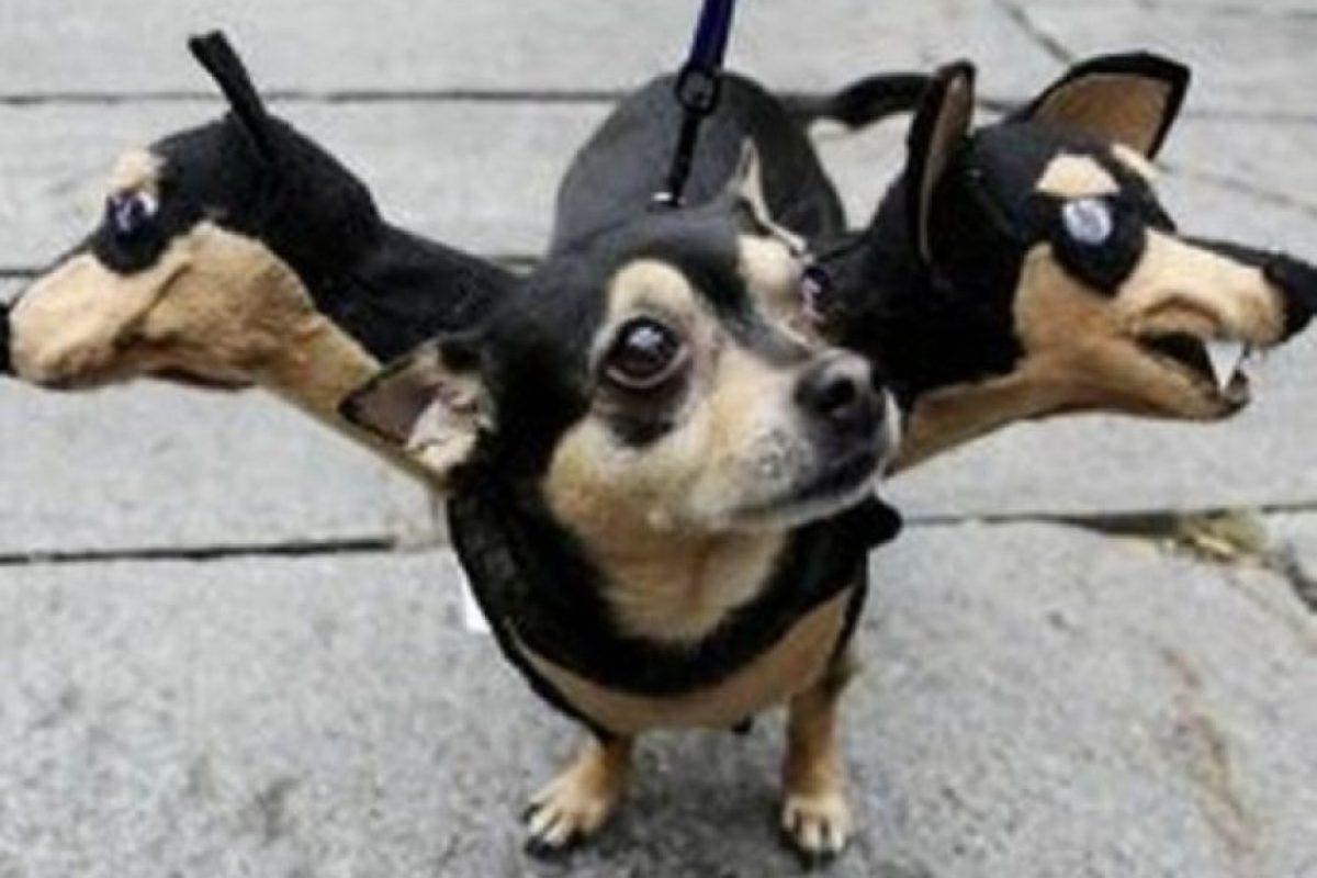¡Perro malvado de tres cabezas! Foto:Know Your Meme