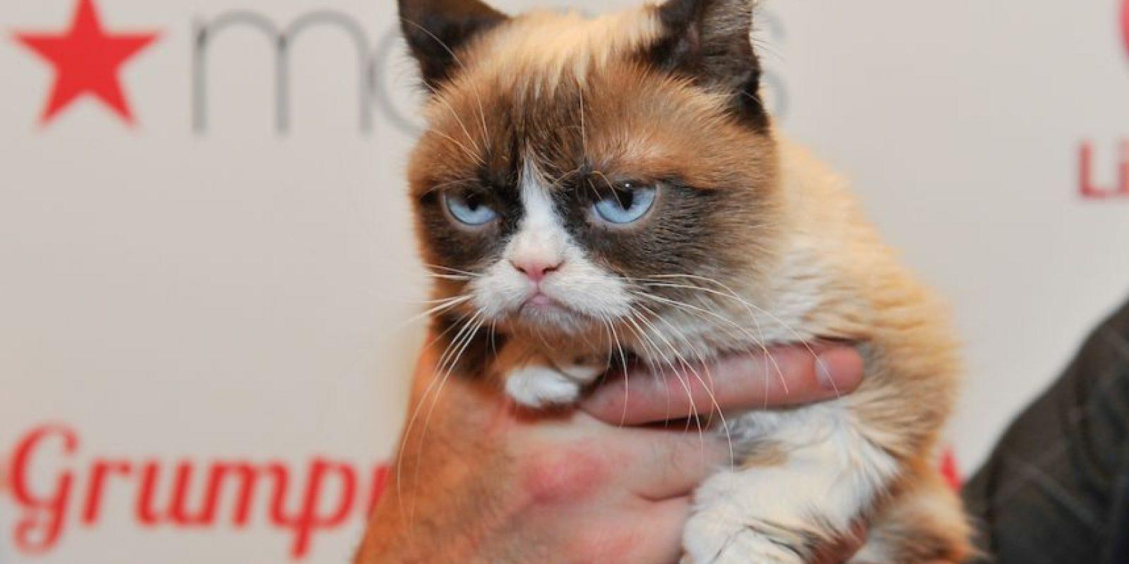 Si dividieramos sus ingresos por año, estas famosas habrían ganado menos que Grumpy Cat. Foto:Getty Images