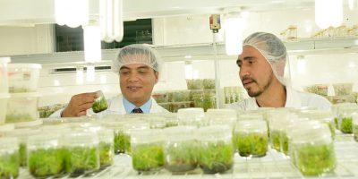 Benedicto Lúcas de Conap supervisa el laboratorio. Foto:Conap
