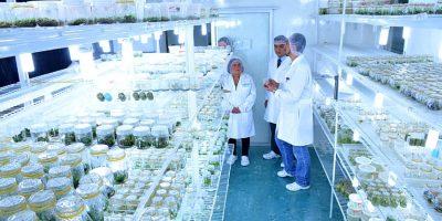 La Monja Blanca crece en un laboratorio
