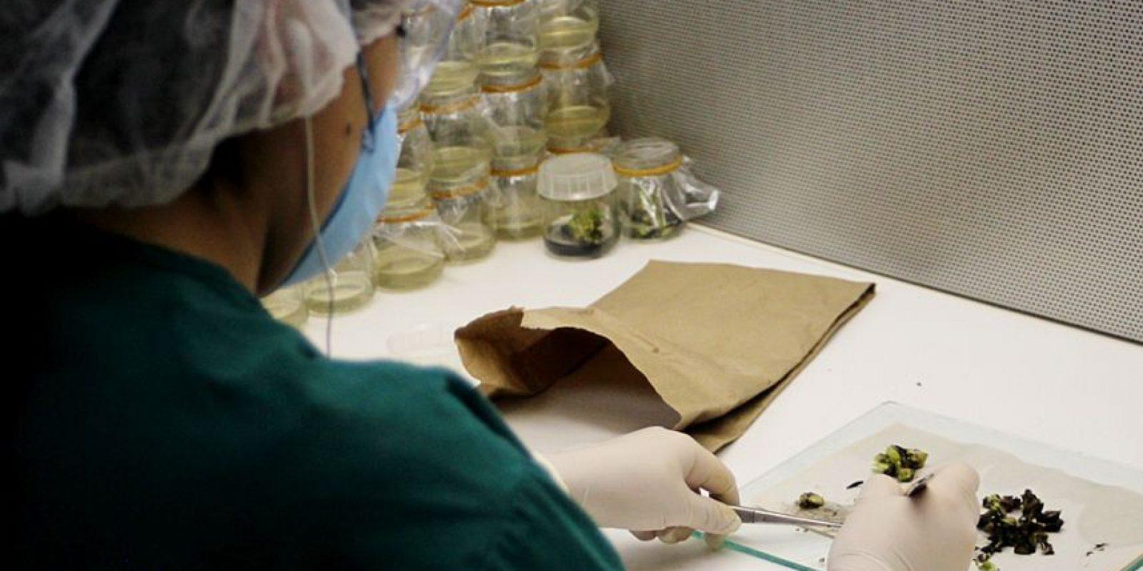 Las semillas son revisadas de forma cuidadosa. Foto:Conap