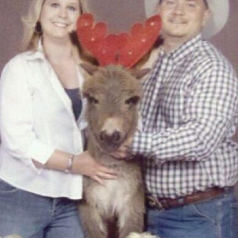 """El reno dice """"¡ayúdenme!"""" Foto:Awkward Family Photos"""