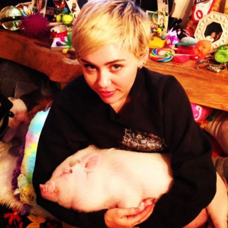 Aquí Miley con su cerdo Bubba Sue Foto: Instagram/Miley Cyrus