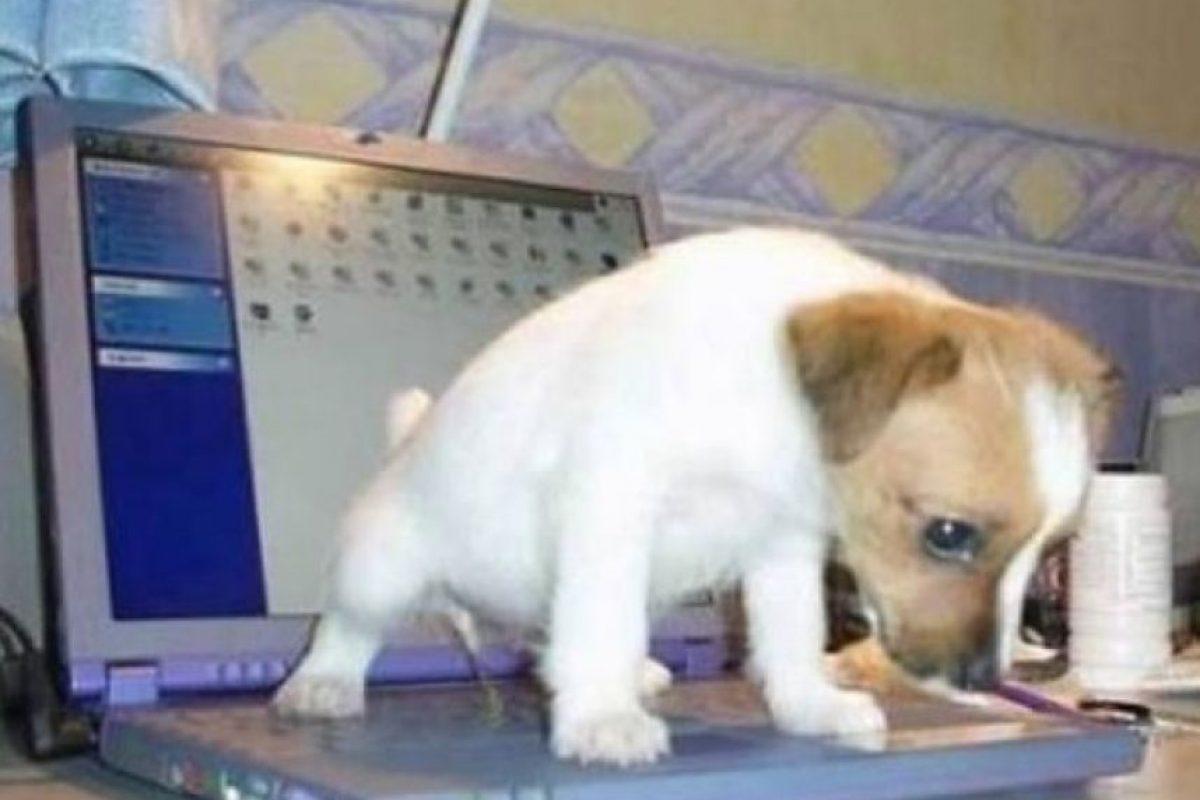 ¡No otra vez! Foto:Tumblr.com/Taggad-fotos-graciosas