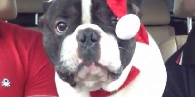 VIDEO: ¡Qué risa! Un perro