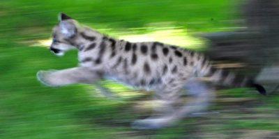 3. El 90% de los animales atropellados son pequeños como aves, anfibios, roedores, tortugas. Foto:Getty