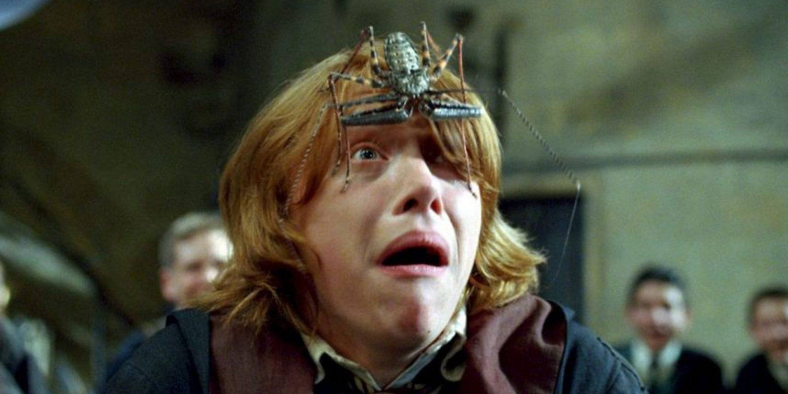 Al igual que su personaje Ron Weasley, al actor Rupert Grint le dan miedo las arañas. Foto:Facebook/Harry Potter
