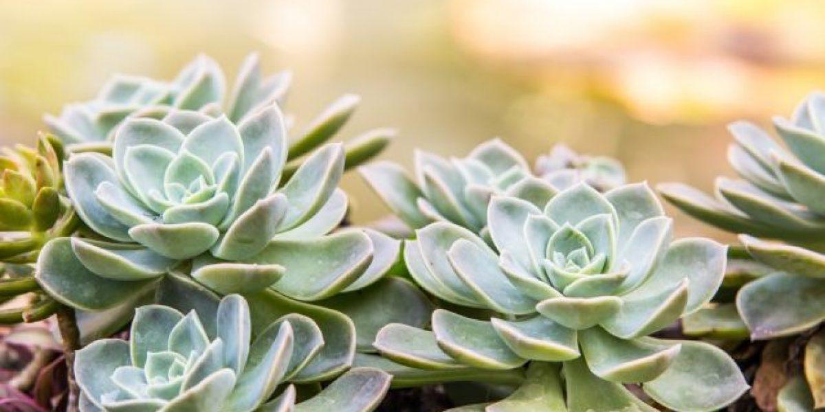 Plantas ornamentales del pa s adornan hogares en el for Tres plantas ornamentales