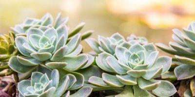 Plantas ornamentales del país adornan hogares en el extranjero
