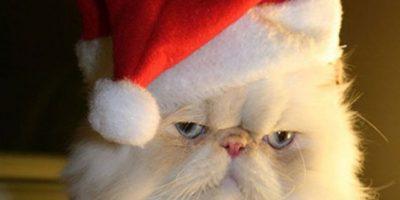 No pasó lo mismo con este gato Foto:Pinterest