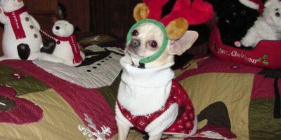 Un momento… ¿Estoy disfrazado de reno? Foto:Tumblr.com/Tagged/masctoas-santa-claus