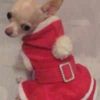 Foto:Tumblr.com/Tagged/masctoas-santa-claus