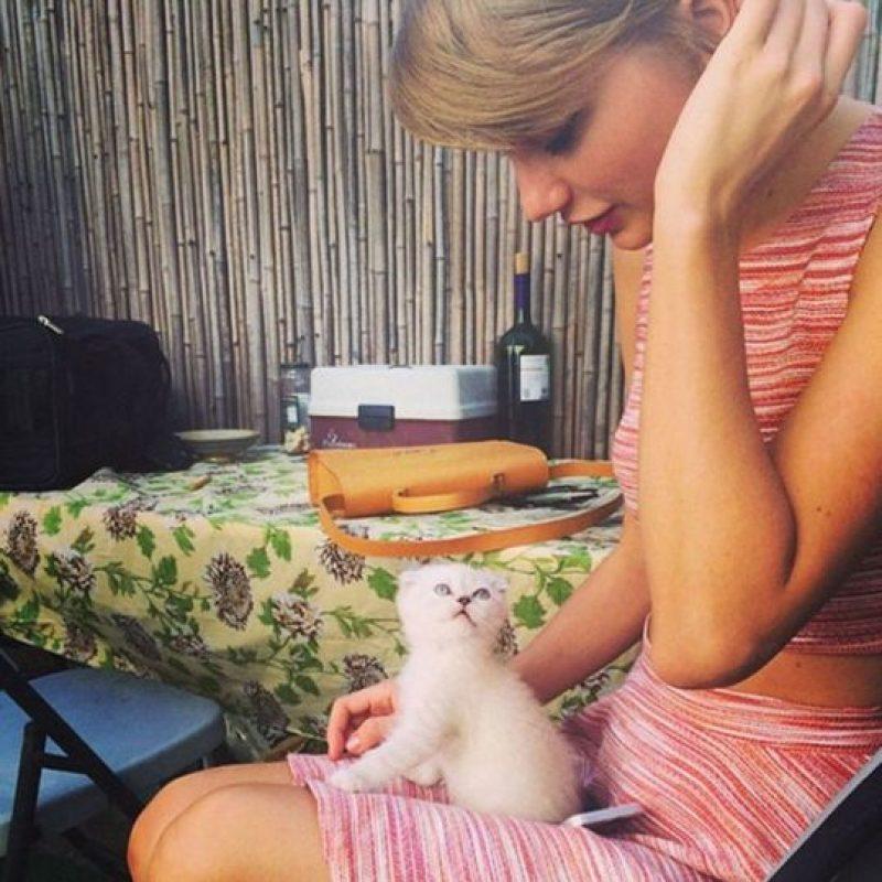 Primero, ama a los gatos Foto:Agencias