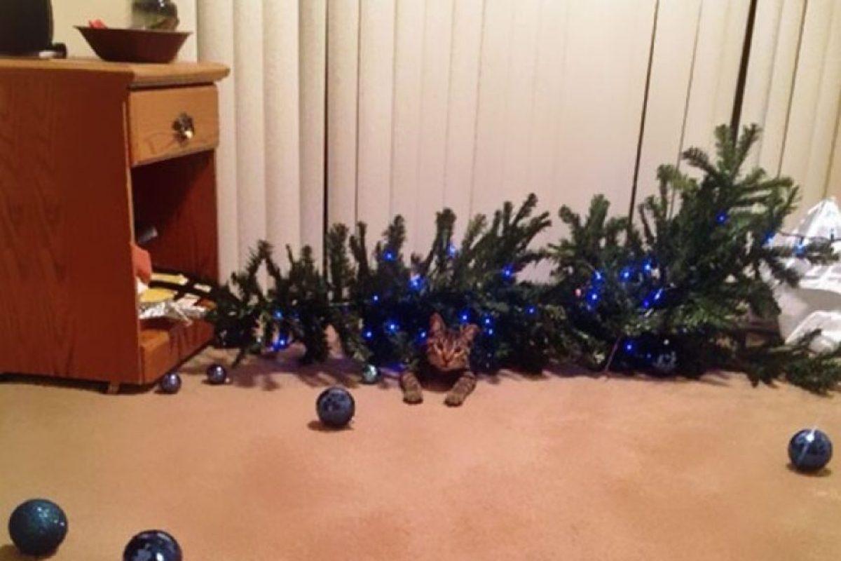 ¡Árbol abajo! Foto:Tumblr.com/Tagged/animales-destruir-navidad