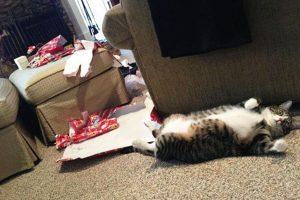 Foto:Tumblr.com/Tagged/animales-destruir-navidad