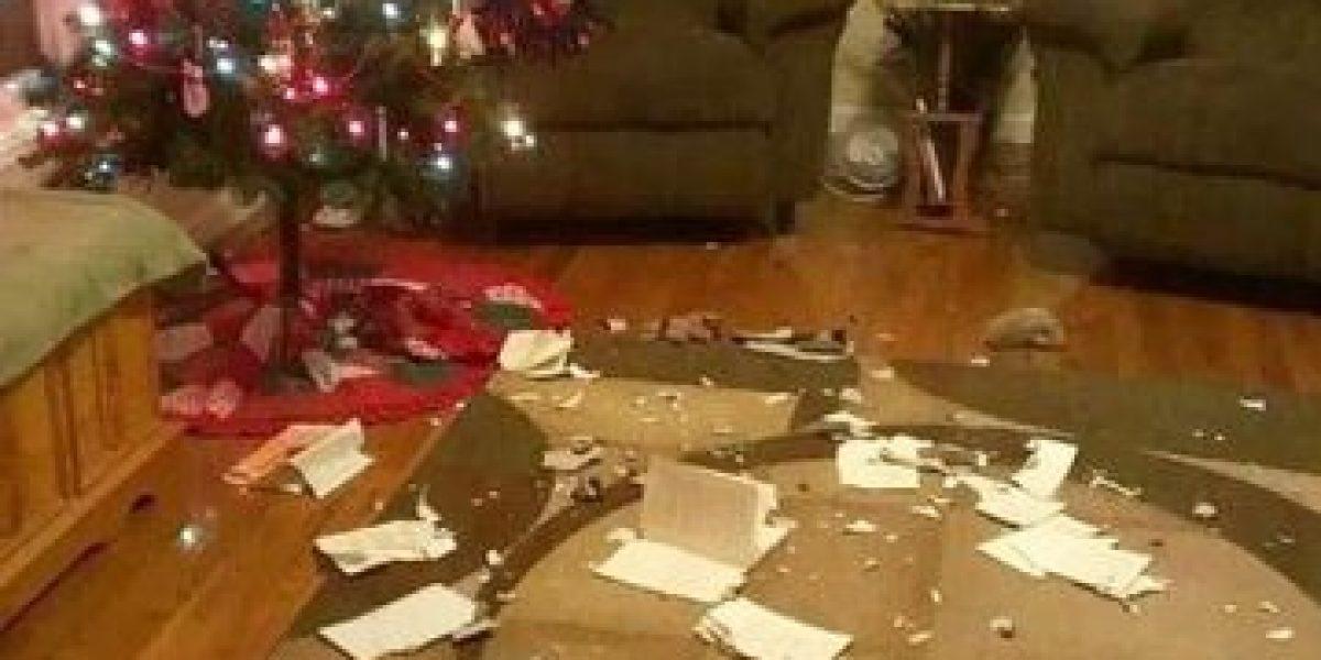 FOTOS: 25 señales de que los animales no se llevan bien con la Navidad