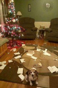 Creo que alguien se ha metido en problemas. Foto:Tumblr.com/Tagged/animales-destruir-navidad