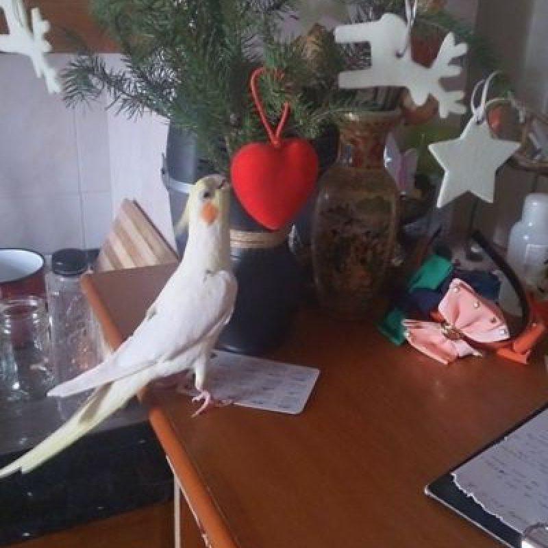 ¡Esto se ve divertido! Foto:Tumblr.com/Tagged/animales-destruir-navidad