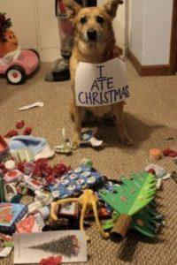 ¡Se nota! Foto:Tumblr.com/Tagged/animales-destruir-navidad