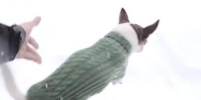 VIDEO: ¡Cruel! Hombre saca a pasear a su perro en la nieve y esto es lo que pasó