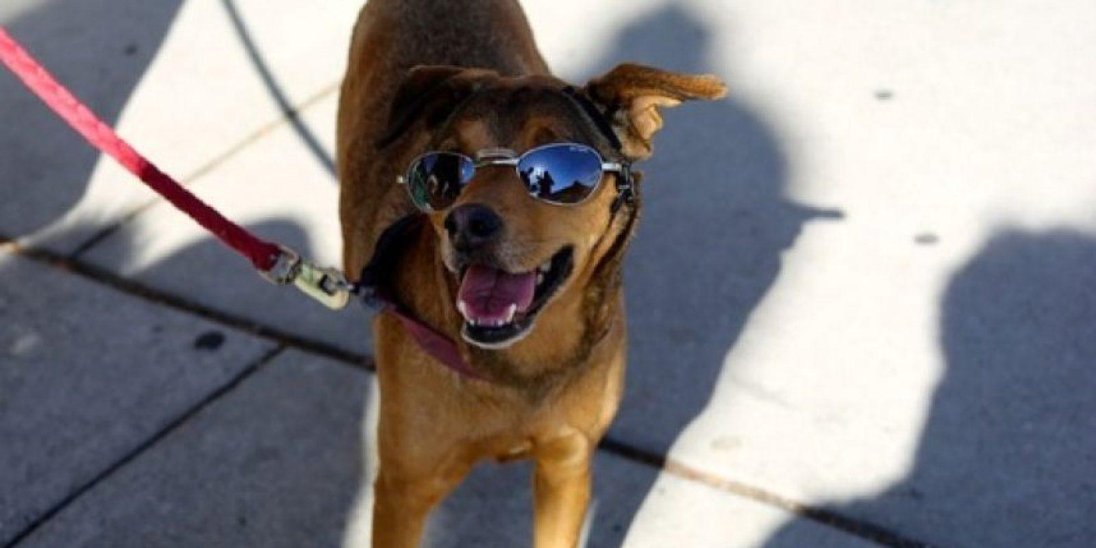 """Un perro """"cool"""" Foto:Pixabay"""