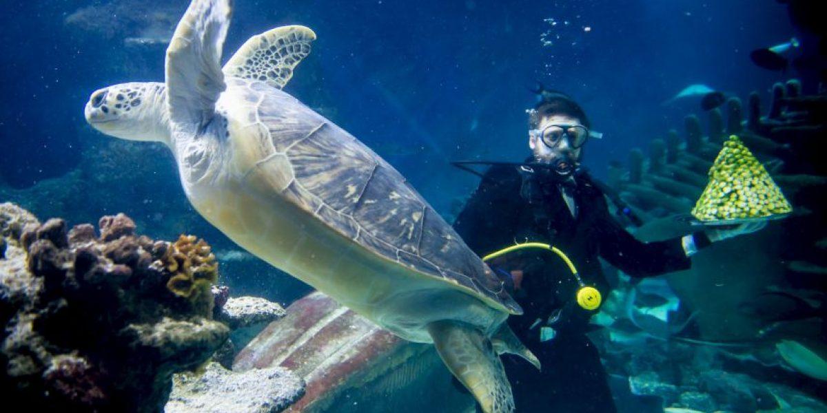 VIDEO: ¡Insólito! Heróica tortuga rescata a otra tortuga