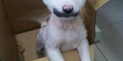 VIDEO: Perro corre por primera vez gracias a implantes impresos en 3D