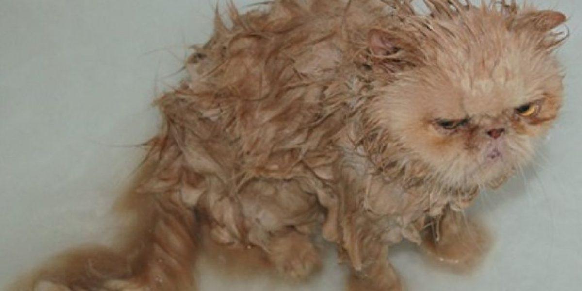 FOTOS: ¡Qué risa! Esta es la reacción de las mascotas al tomar un baño