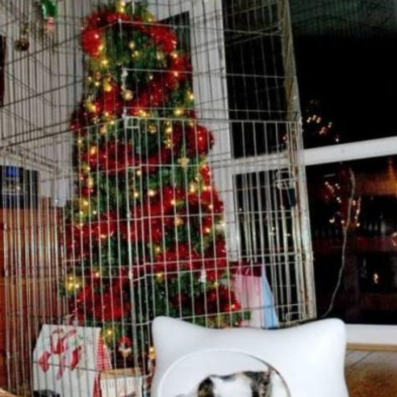 A salvo el árbol Foto:Vía Intagram: @VHaasbroek