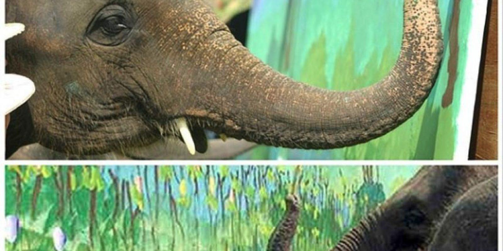 Este elefante puede pintar con su trompa Foto:Instagram/guinnessworldrecords