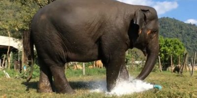 Foto:Vía Youtube: Elephantnews