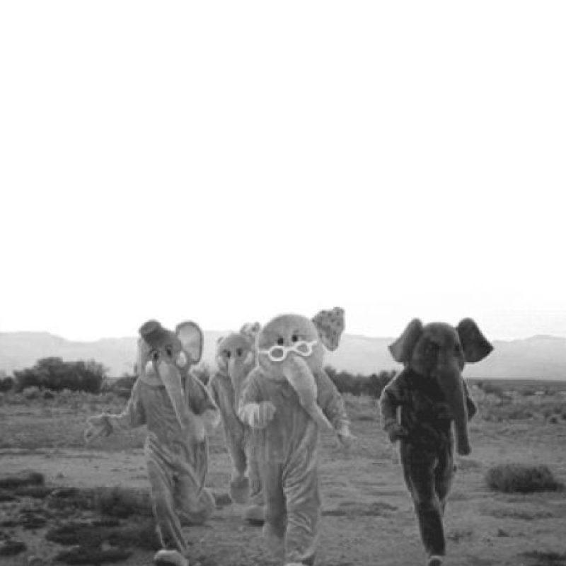 Foto:Tumblr.com/tagged-elefantes