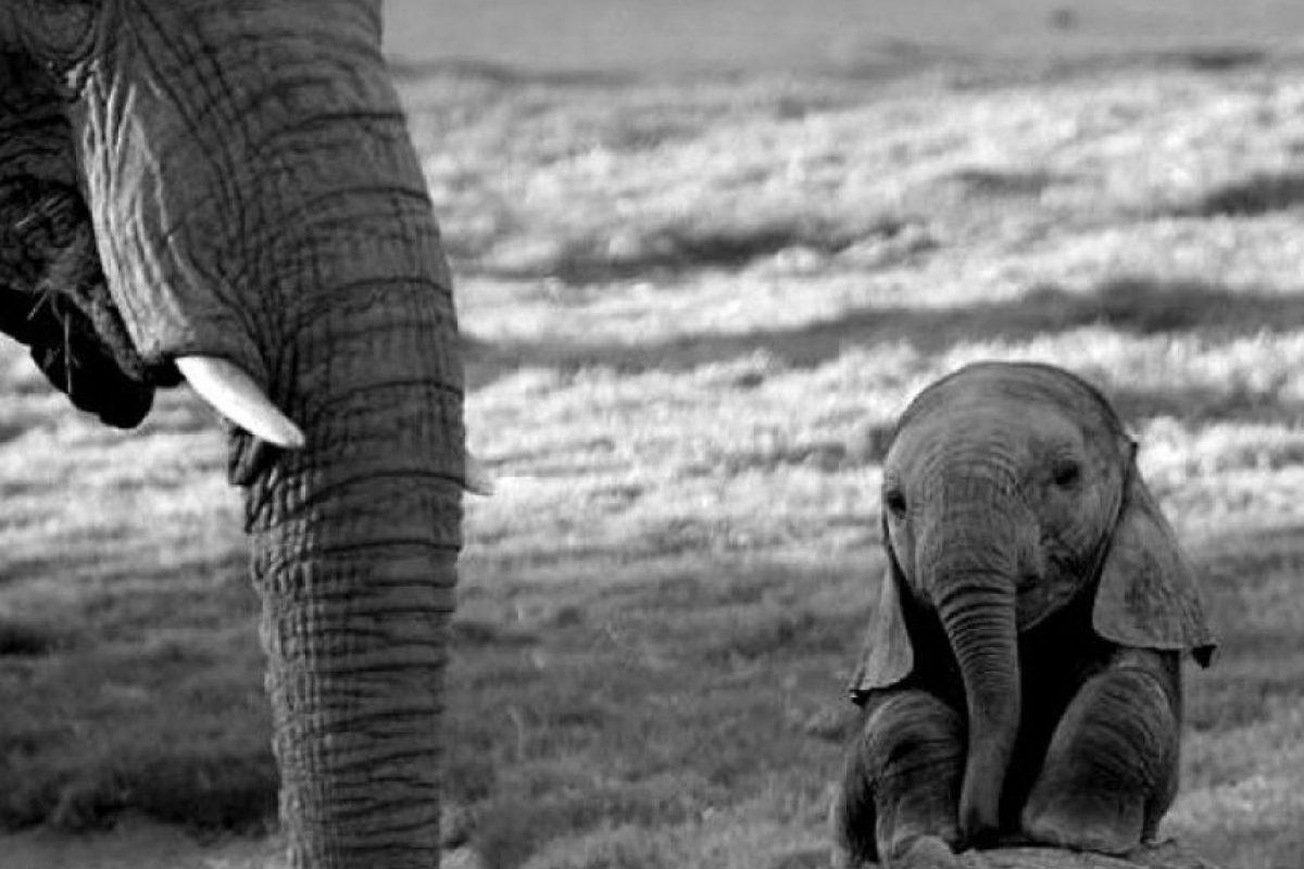 Mamá y bebé elefantes Foto:Tumblr.com/tagged-elefantes