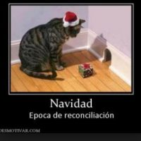 Aww! Foto:Tumblr.com/Tagged-Navidad-memes